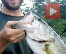 Watermeat Video Thumbnail