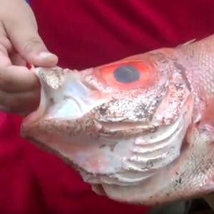 Alabama Deep Sea Fishing Rodeo - ADSFR