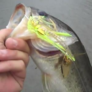 Dog River Winter Bass
